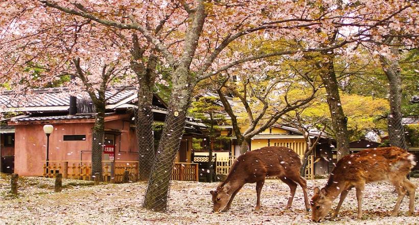 Nara-Park-1